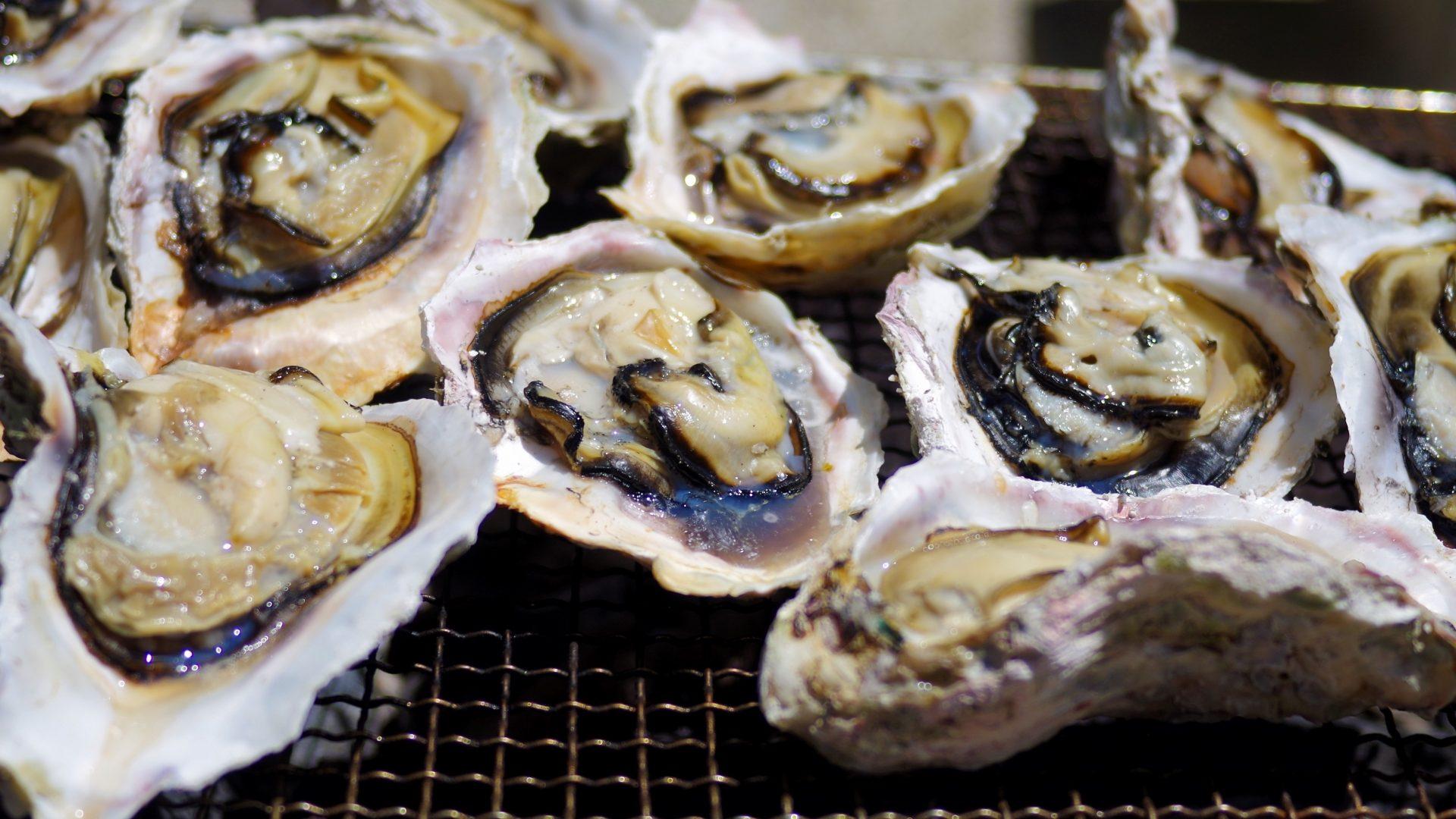 浦村かき食べ放題 浜英水産