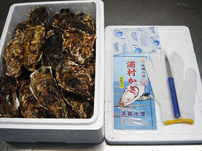 浜英水産製 セル牡蠣 70個入り